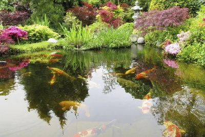 Für einen Fischteich brauchen Sie einen Teichfilter.