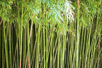 Bambussorten, die Ausläufer bilden, brauchen eine Wurzelsperre.