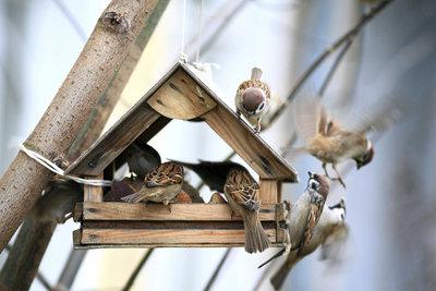 Futterhäuschen bieten Vögeln vor allem im Winter eine unersetzliche Versorgungsstelle.