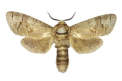 Motten sind die häufigsten Schädlinge.