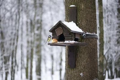 Ein gut gebautes Vogelhäuschen erfüllt auch hygienische Bedingungen.