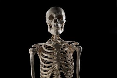 Wer ein besonders gruseliges Skelett basteln möchte, sollte anatomische Fakten einhalten.