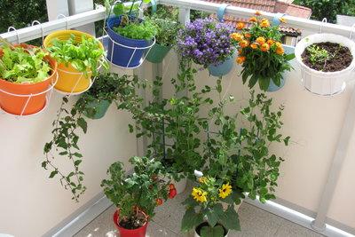 Balkonpflanzen benötigen in Ihrer Abwesenheit zuverlässige Bewässerung.
