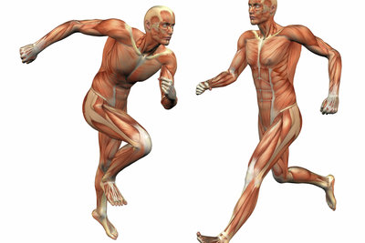 Erst durch die Muskulatur kann sich der Mensch auf unterschiedliche Art und Weise bewegen