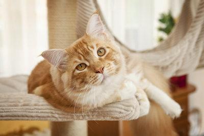 Machen Sie Ihrer Katze mit einem Baum in der Wohnung eine Freude.