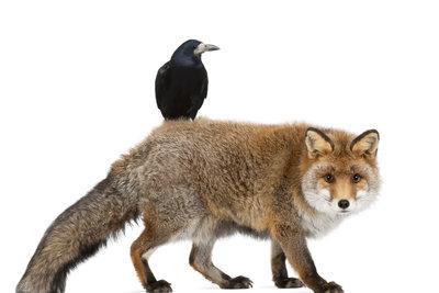 """""""Der Rabe und der Fuchs"""" ist eine berühmte Fabel von Gotthold Ephraim Lessing."""