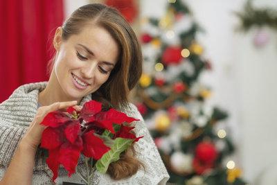 Ein Weihnachtsstern bringt bei richtiger Pflege das ganze Jahr über Freude.
