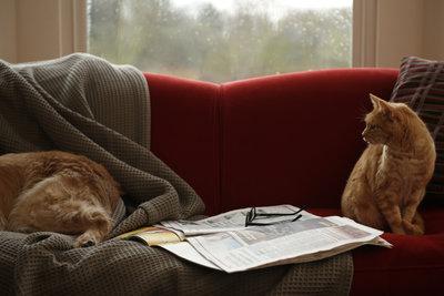 Wer Haustiere hat, sollte das Sofa mit einer Decke schützen.