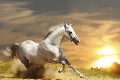 Der erste apokalyptische Reiter hat ein weißes Pferd. Er könnte ein Zeichen der Hoffnung sein.
