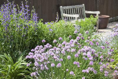 Legen Sie sich einen Kräutergarten auf kleinstem Raum an.
