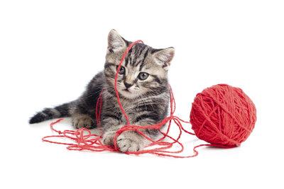 Aufregend, aber nicht ungefährlich: Ein Wollknäuel ist als Katzenspielzeug weniger geeignet.