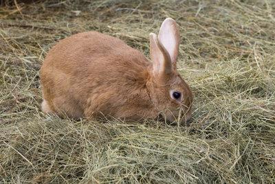 Genug Material für ein Kaninchen zum Nestbau.