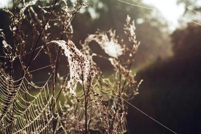 Seidene Flughilfen für fliegende Spinnen.