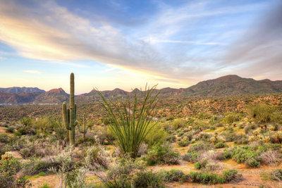 Nach Regengüssen entwickeln sich in der Wüste schnell verschiedene Pflanzen.