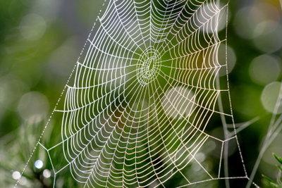 Spinnennetz - malerisch in der Natur, aber in Wohnungen sind die Achtbeiner weitgehend unerwünscht.