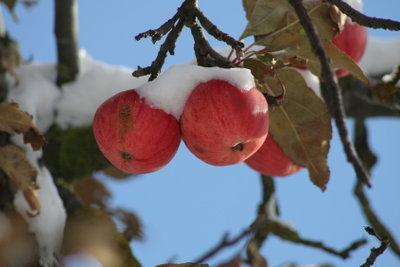 Äpfel am besten als Apfelkuchen einfrieren – schmeckt wie frisch gemacht.