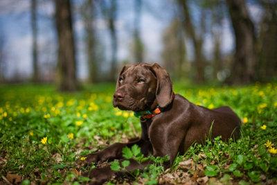 Besonders im Wald lauern viele Zecken. Die Zeckenentfernung bei Hunden ist nicht schwer.