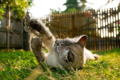 Wenn es im Sommer zu heiß ist, sind Katzen weniger agil.
