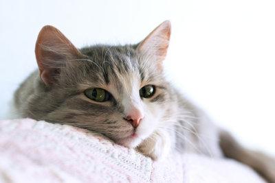 Mundgeruch bei Katzen kann behandelt werden.