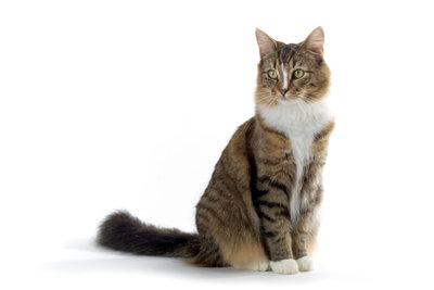 Rollige Katzen können anstrengend sein.