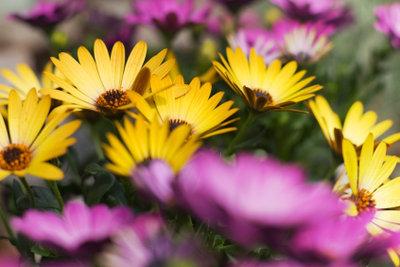 Mit unterschiedlichsten Blumen können Sie Ihren Balkon bepflanzen.