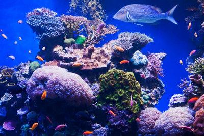 Die richtige Temperatur im Aquarium ist wichtig für gesunde Fische und Pflanzen.