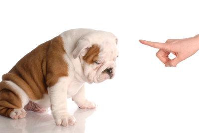 Eine gewisse Strenge ist das A und O der Hundeerziehung. So hat Ihr Hund auch Interesse an Ihnen.