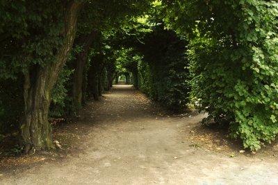 Alte Hainbuchenhecken zieren viele Schlossparks.