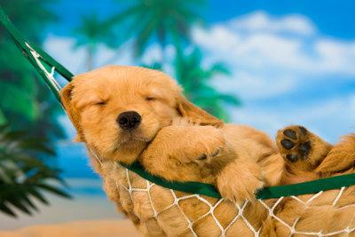 Abkühlung durch eine luftige Brise, kann dem Hund helfen, die Hitze zu überstehen.