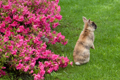 Am liebsten hoppeln Zwergkaninchen durch den Garten