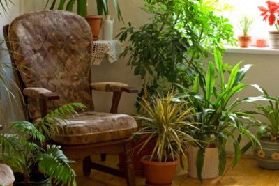 Hydrokultur eignet sich für viele Zimmerpflanzen.