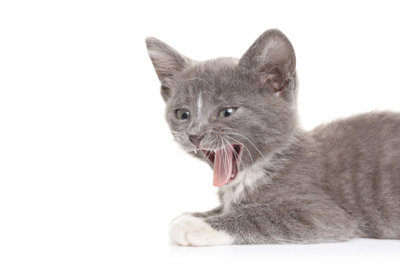 Auch Katzen streiten, nicht immer herrscht eitel Sonnenschein.