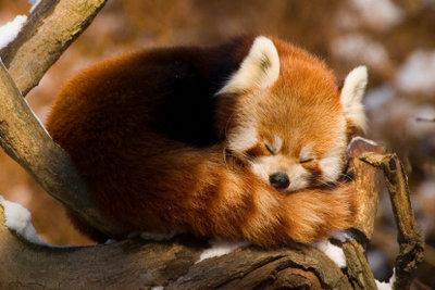 Ihr Firefox ist zu langsam? Dann machen Sie Ihrem Browser Beine!