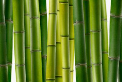 Mit seinem dekorativen Wuchs verschönert Bambus den Garten.