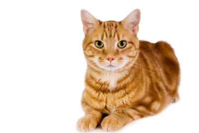 Bekommen Katzen Ihre Periode