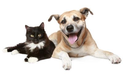 Die neue Katze an den alten Hund gewöhnen - auch das kann funktionieren.