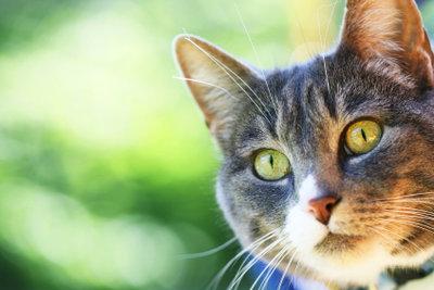 Katzen sind pflegeleichte Tiere, die jedoch gerne beschäftigt werden.