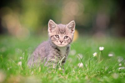 Katzen sind im Freien in ihrer Natur. Jedoch sollte man sie an die Freiheit erst gewöhnen.