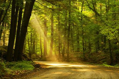 Ein Traum von vielen, die keine Lust auf Menschen haben - Leben allein in der Natur.