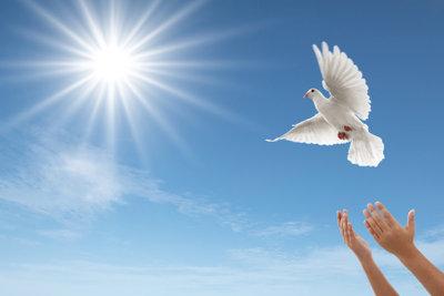 Weiße Tauben bringen dem Brautpaar Glück
