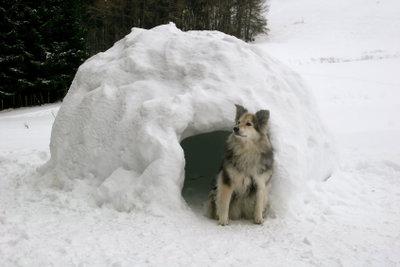 Mit etwas Geschick ist schnell eine Hundehütte gebaut.