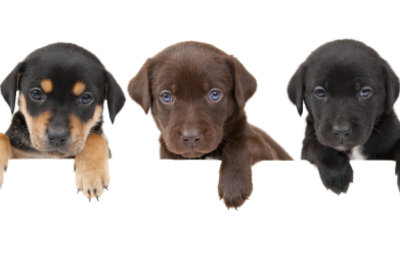 Egal wie klein, jeder Hund muss, beim Finanzamt angemeldet werden.