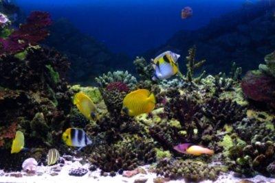 So reinigen Sie die Aquariumsdekoration von Algen.