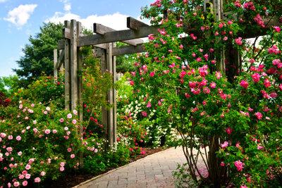Rosen schmücken jeden Garten.