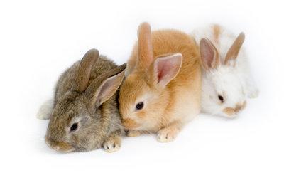 Damit Ihre Kaninchenfamilie gesund bleibt, braucht das trächtige Kaninchen extra Pflege.