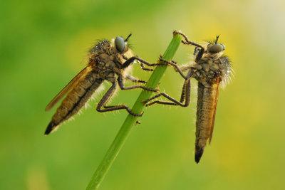 Mücken im Garten: Leichter loszuwerden, als man glaubt.