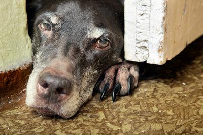 Ein Hund sollte nicht durch Bestrafung erzogen werden, sondern durch positive Verstärkung.