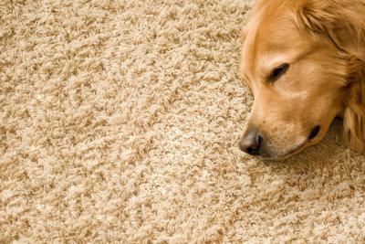 Entfernen Sie Milchflecken vom Teppich, damit sich ein jeder dort wieder wohl fühlt.
