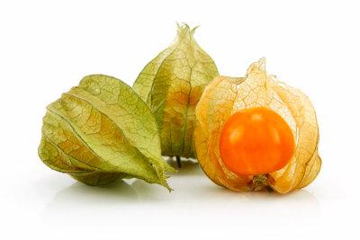 Die orangefarbenen Früchte der Physalis reifen erst kurz vor dem ersten Frost vor dem Winter.