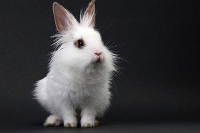 Aus zwei mach viele. So züchten Sie Kaninchen.